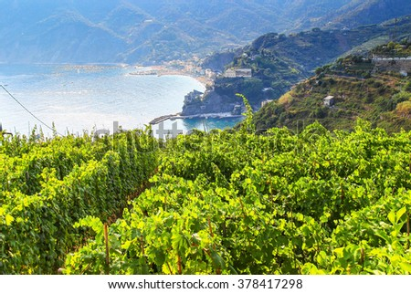 Vineyards above the sea in Cinque Terre national Park, Italy. - stock photo