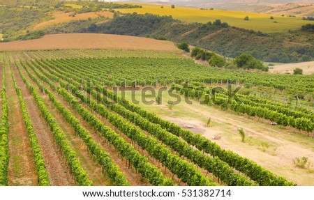 Vineyards along Danube river, Bulgaria