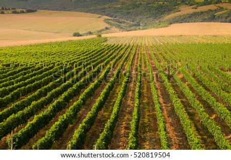 Vineyards along the Danube river, Bulgaria