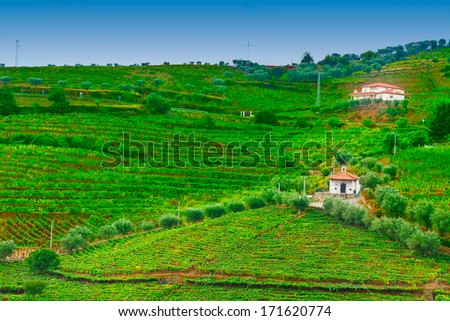 Vineyards and the Church  on the Hills of Portugal - stock photo