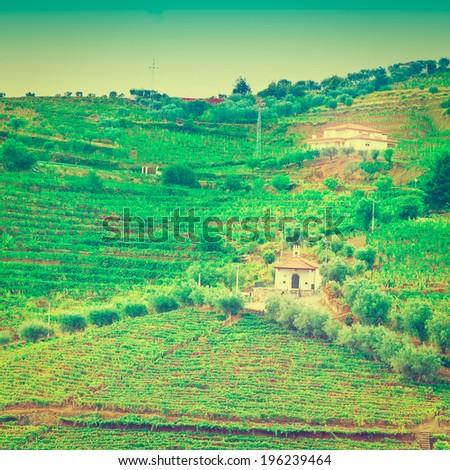 Vineyards and the Church  on the Hills of Portugal, Retro Effect - stock photo