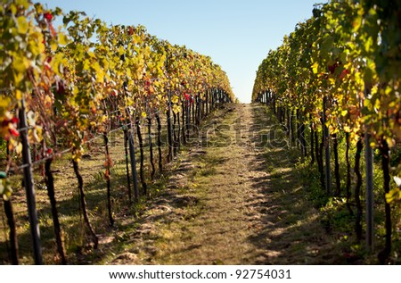 Vineyards and the Haardt Forest in late autumn - stock photo