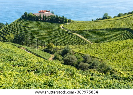 Vineyards and wine cellar with the Cantabrian sea in the background, Getaria (Spain)
