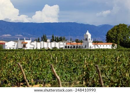 Vineyards, Argentina - stock photo