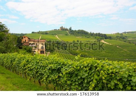 Vineyards at Barolo, in the Langhe wine district, Italy - stock photo