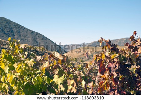 Vineyards at Douro river valley in autumn, Uncesco world heritage, Portugal - stock photo