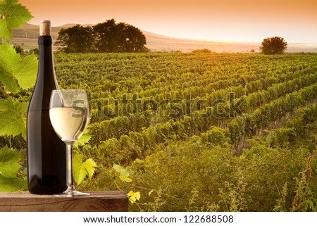 Vineyards at sunset in a beautiful summer evening - stock photo