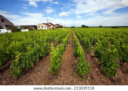 vineyards Burgundy, France