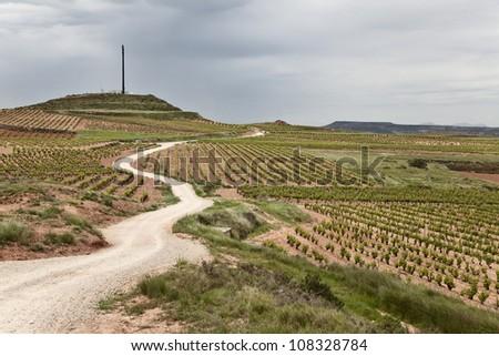 Vineyards fields in La Rioja along the camino de Santiago - stock photo