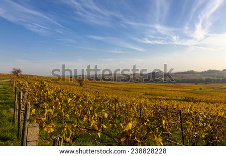 Vineyards in autumn in the Southern Palatinate