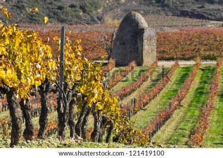 Vineyards In Autumn, La Rioja (Spain) - stock photo