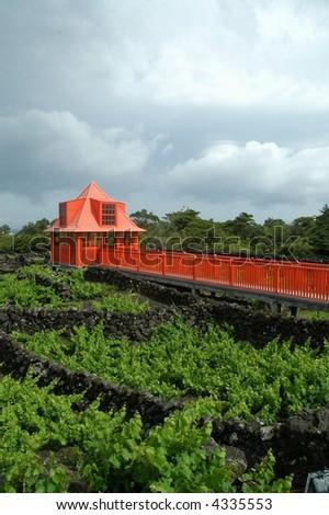vineyards in azores - stock photo
