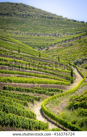 Vineyards in Douro Valley, Portugal - stock photo