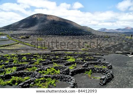 Vineyards in La Geria, Lanzarote, canary islands, Spain. - stock photo