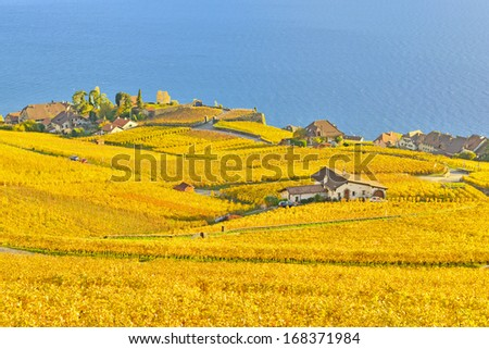 vineyards in Lavaux region against Geneva lake  - stock photo