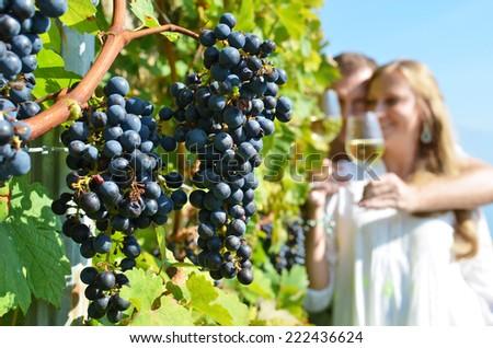 Vineyards in Lavaux, Switzerland - stock photo