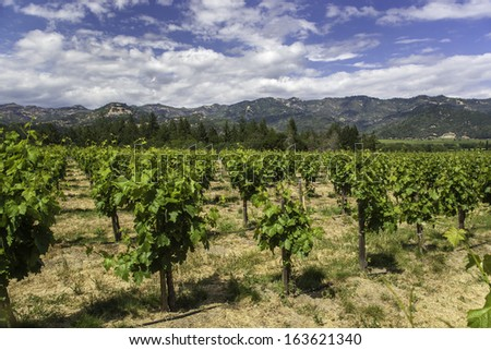 Vineyards in Napa Valley, California - stock photo