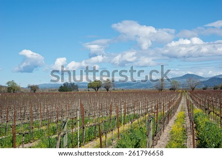 Vineyards in Sonoma County during a late winter season - stock photo