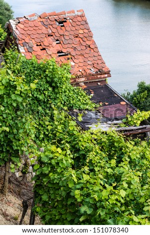 Vineyards in Stuttart - Bad Cannstatt: Very steep hills along river Neckar with an old rundown hut and the river in the background - stock photo