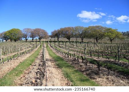 Vineyards in Tasmania Australia - stock photo