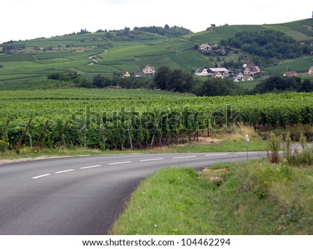 Vineyards in the Alsace region in France