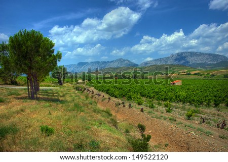 Vineyards in the AOC Maury region of France - stock photo
