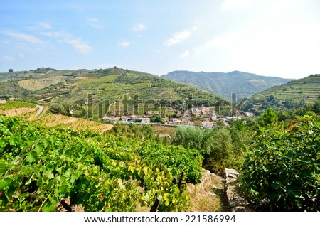 Vineyards in the Douro Valley near Pinhao, Portugal - stock photo
