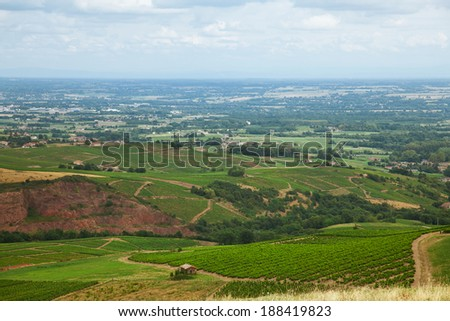 Vineyards in the famous wine making region of Beaujolais, France
