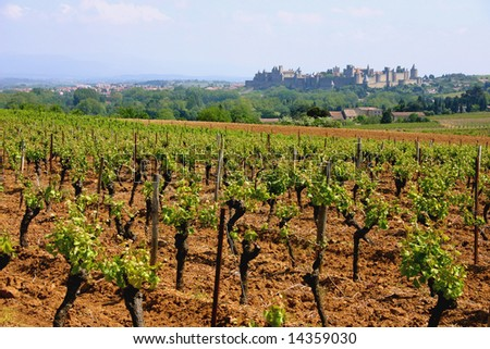Vineyards in the South of France looking towards the medieval town of Carcassonne
