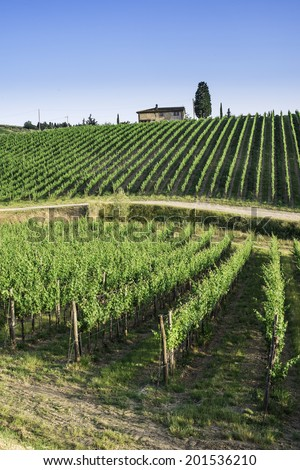 Vineyards in Tuscany. Farm house.