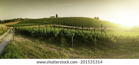 Vineyards in Tuscany. Farm house at sunset. Panoramic view - stock photo