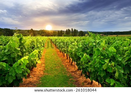 Vineyards in Vaucluse at twilight time, Provence, France  - stock photo