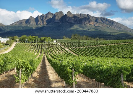Vineyards landscape near Wellington, South Africa - stock photo