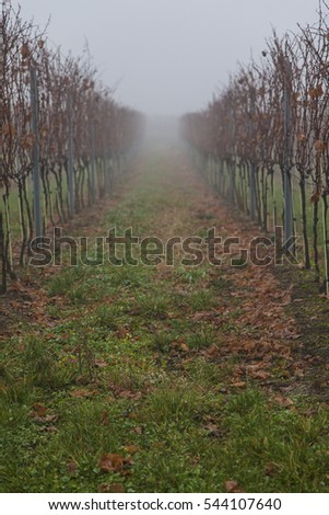vineyards landscape on misty morning