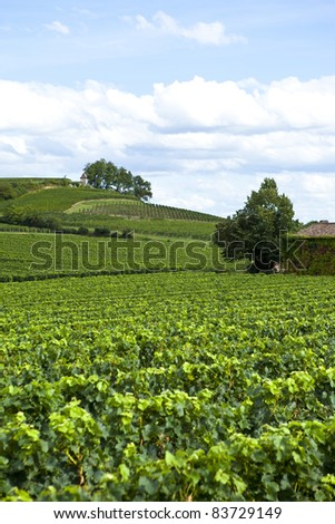 Vineyards near the village of Saint-Emilion