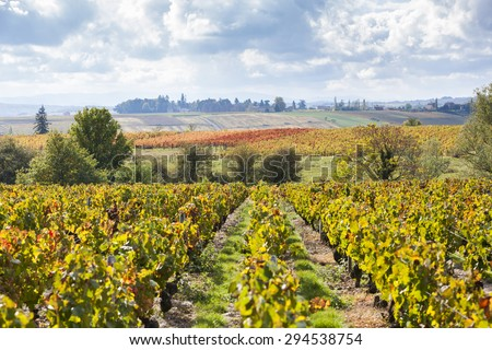 vineyards of Beaujolais, Rhone-Alpes, France