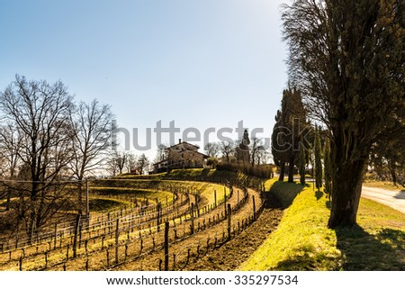 vineyards of italy in early spring in a sunny afternoon - stock photo