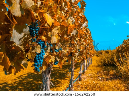 Vineyards of Mendoza, Argentina - stock photo