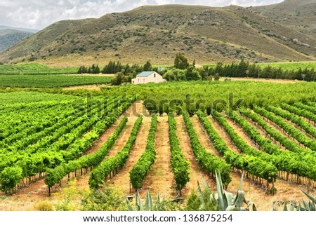 Vineyards of Montagu. Shot in Western Cape, South Africa.  - stock photo