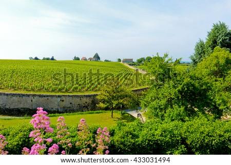 Vineyards of Saint-Emilion - stock photo