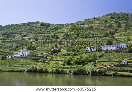Vineyards of the Douro Valley - stock photo