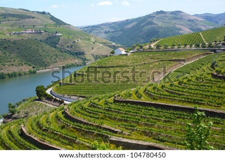 Vineyards of the Douro Valley, Portugal - stock photo
