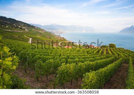 Vineyards of the Lavaux region over lake Leman (lake of Geneva),Switzerland - stock photo