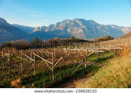 Vineyards of Trentino, Italy, at sunset - stock photo