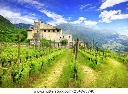 vineyards of Tuscany - stock photo