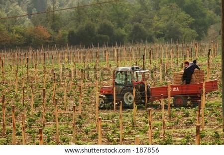 Vineyards - Tuscany, Italy - stock photo