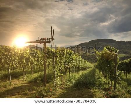 Vineyards with Klapotetz wind wheel in South Styria, Austria Europe - stock photo