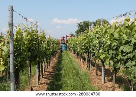 Vineyards / Work in the vineyards. Farmer on a tractor sprays vineyards. - stock photo