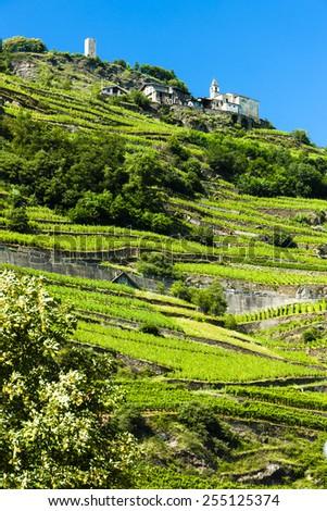 vineyars near San Giacomo Sudovest, Lombardy, Italy - stock photo