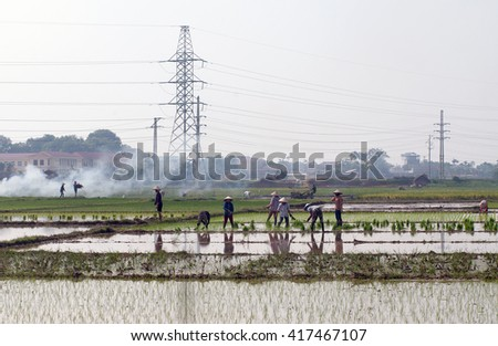 Vinh Phuc, Vietnam, December 25, 2015 FG, Vinh Phuc province countryside, Vietnam, rice cultivation